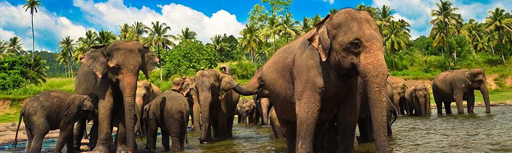 Culture and heritage of Sri lanka